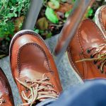 Irish Setter vs Red Wing